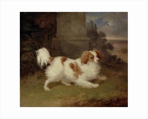 A Blenheim Spaniel by William Webb