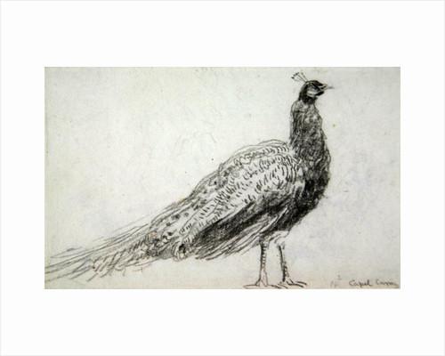 Peacock at Capel Curig by David Cox