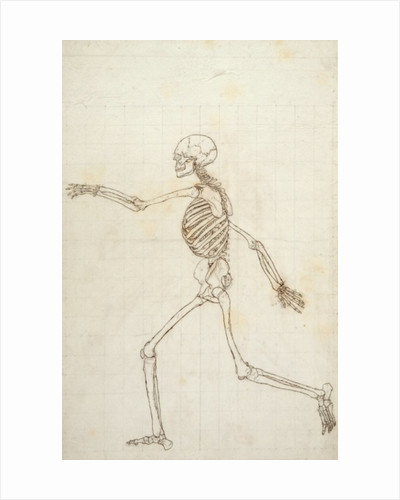 Study of the Human Figure, Lateral View by George Stubbs
