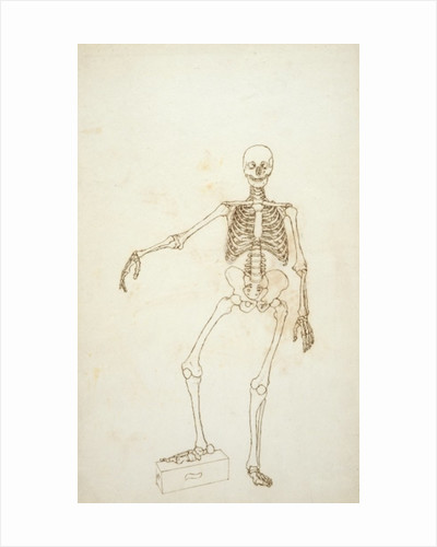 Study of the Human Figure, Anterior View by George Stubbs