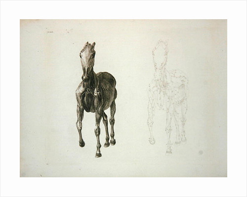 Tab. VIII by George Stubbs