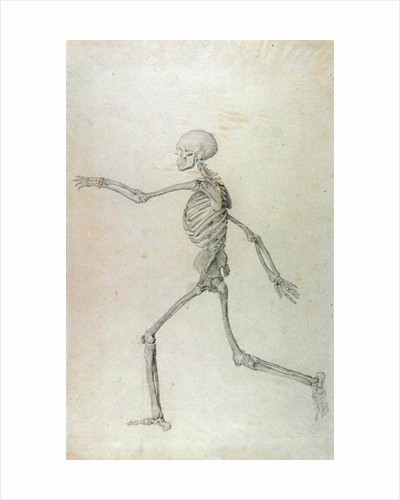 Human Skeleton, Lateral View seen from the Left, Running by George Stubbs