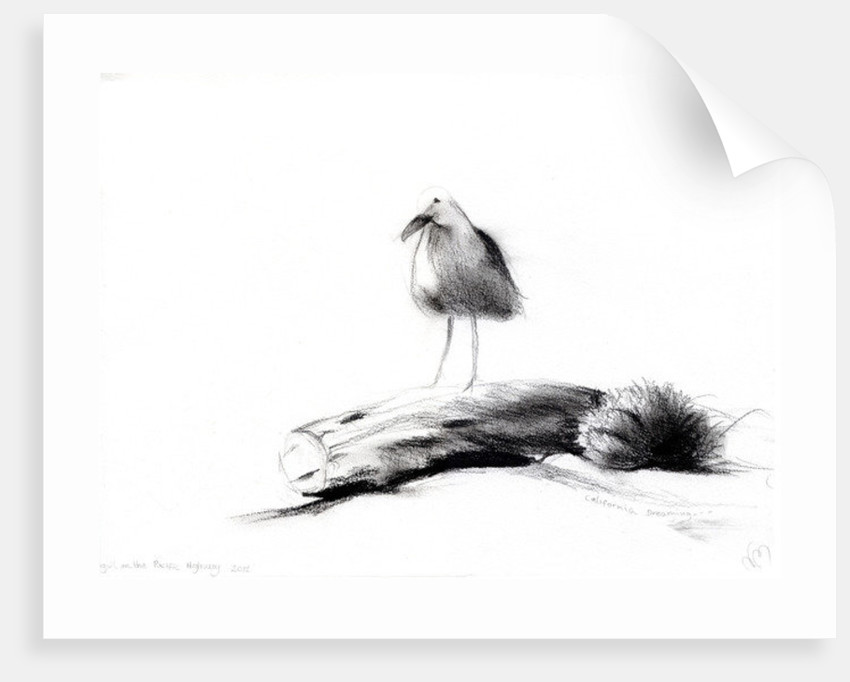 California Seagull by Nancy Moniz Charalambous