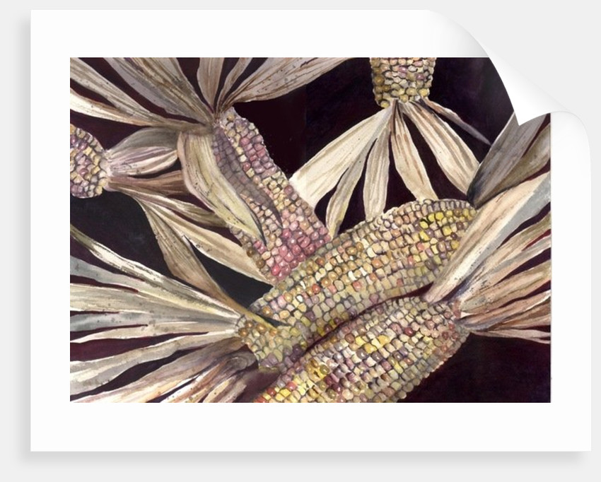 Corn by Neela Pushparaj