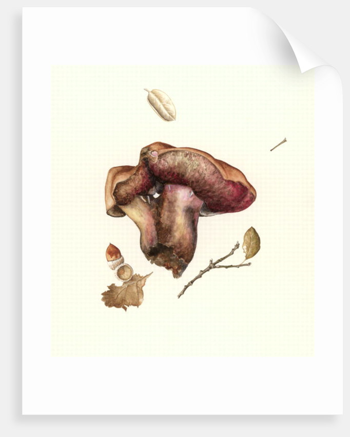 Fungus by Alison Cooper