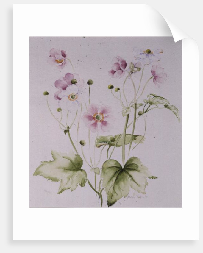 Hellebores by Alison Cooper