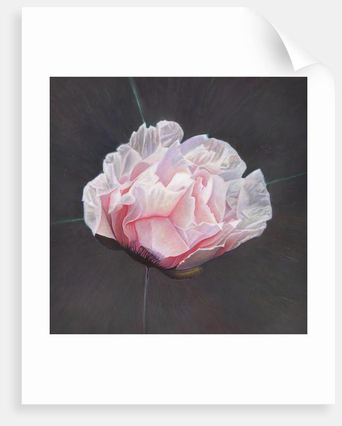 Emergence by Helen White
