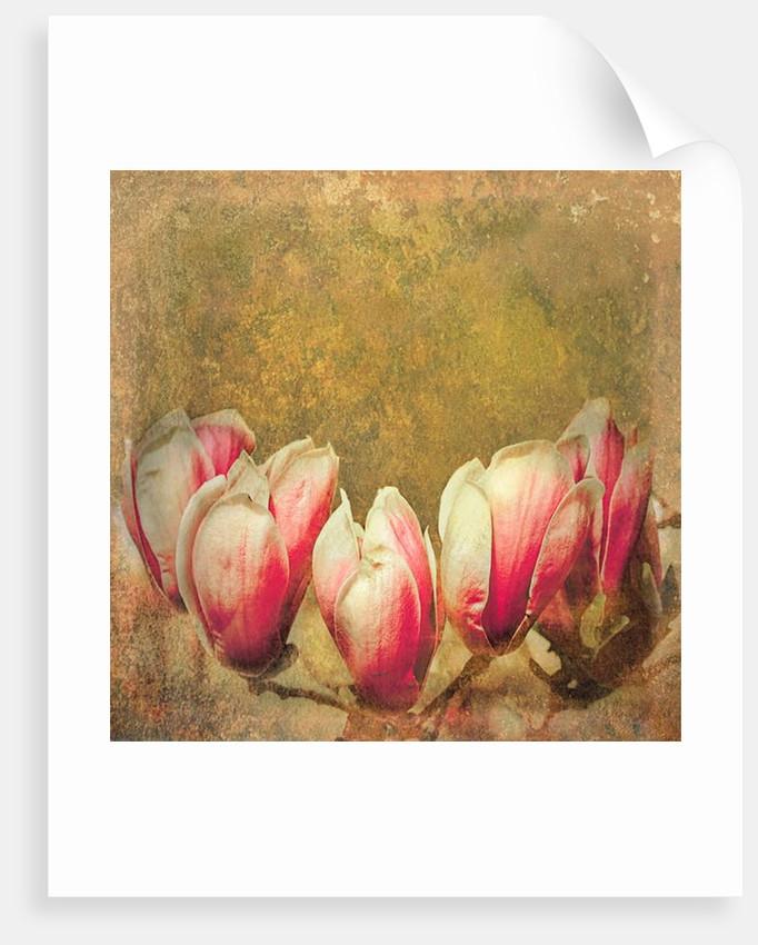 Vintage Magnolia; 2019 by Helen White