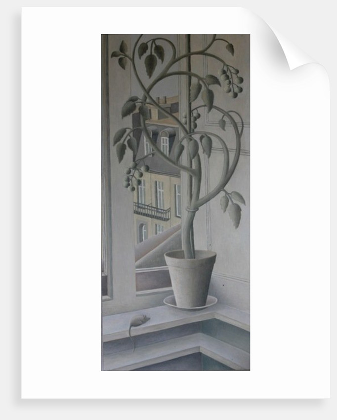 Plant in Window, oil on panel by Ruth Addinall