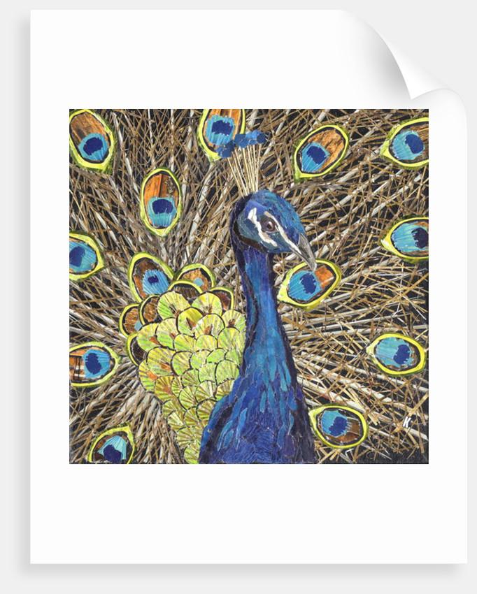 Peacock by Kirstie Adamson