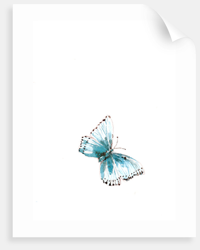 Blue Morpho Butterfly posters & prints by Victoria Watt