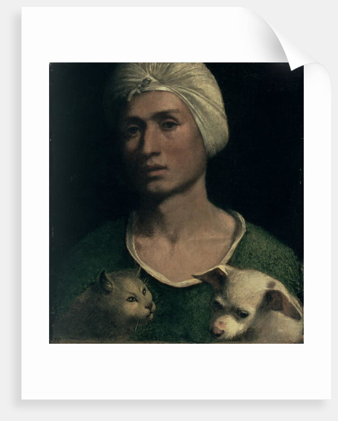Portrait of a Young Man With a Dog and a Cat by Dosso Dossi