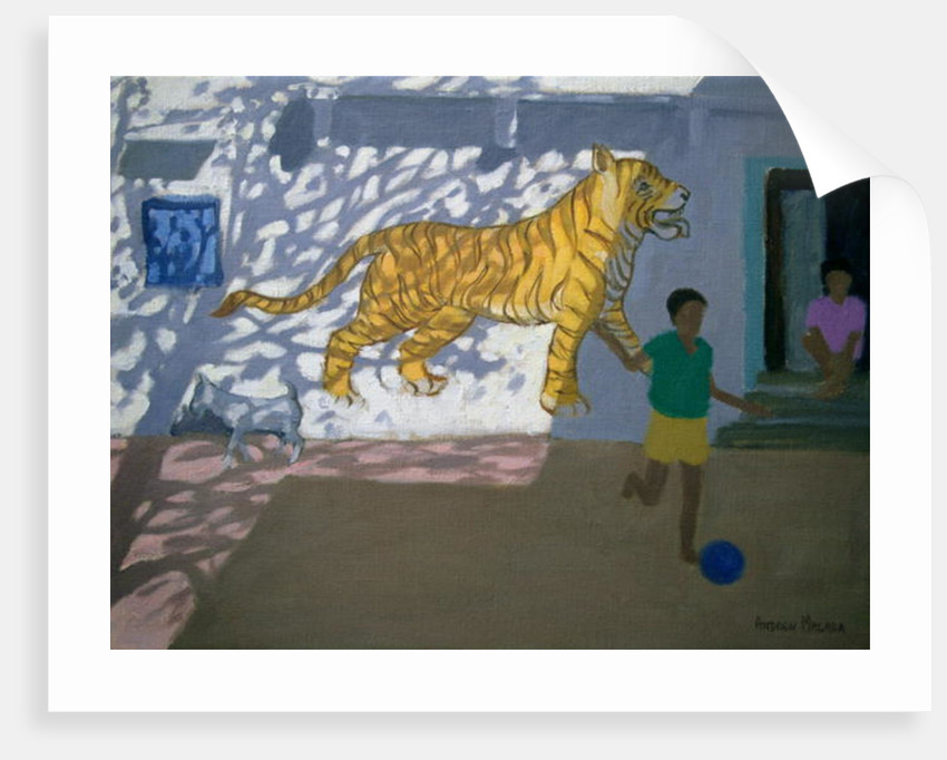 Tiger, India by Andrew Macara