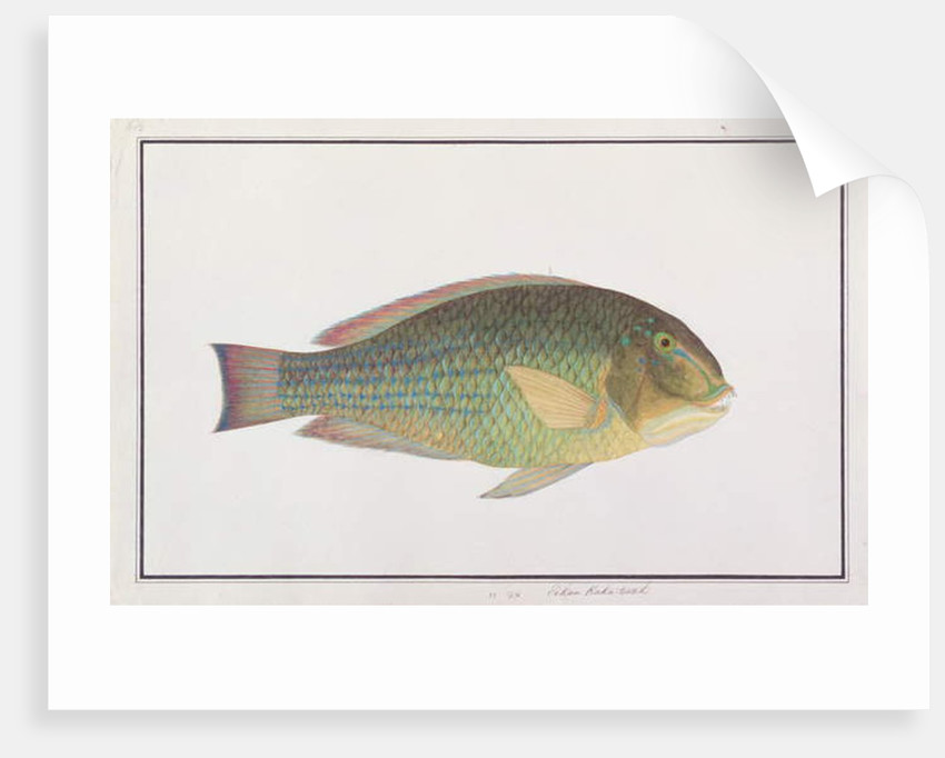 Tuskfish by Chinese School