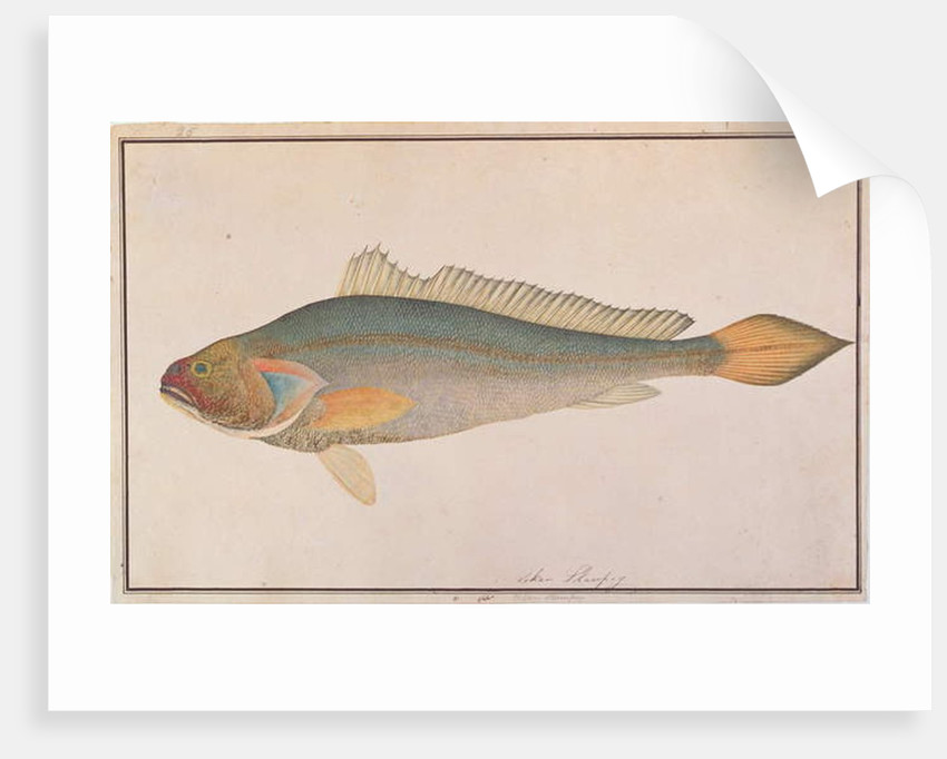 Bronze Croaker by Chinese School