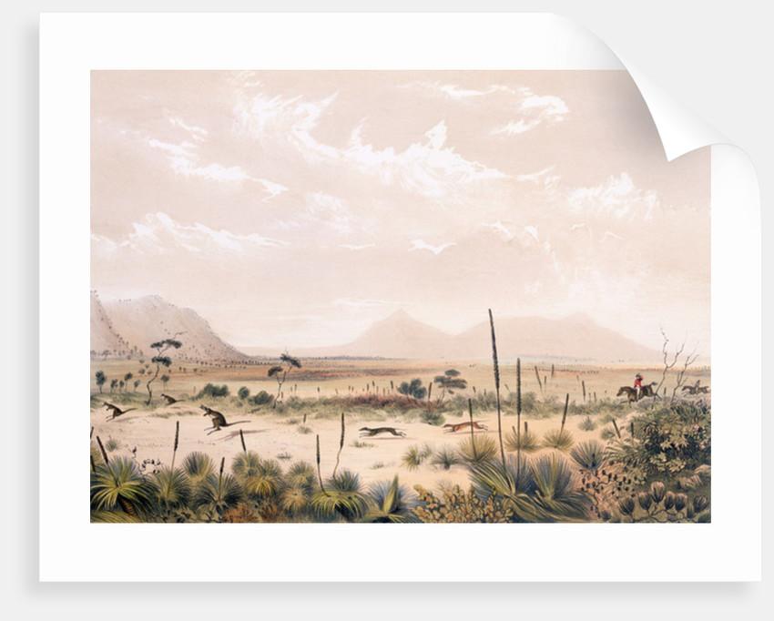 Kangaroo Hunt by George French Angas