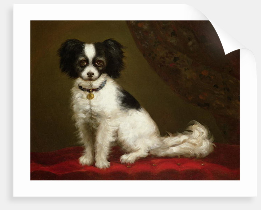 Portrait of a Spaniel by Anonymous
