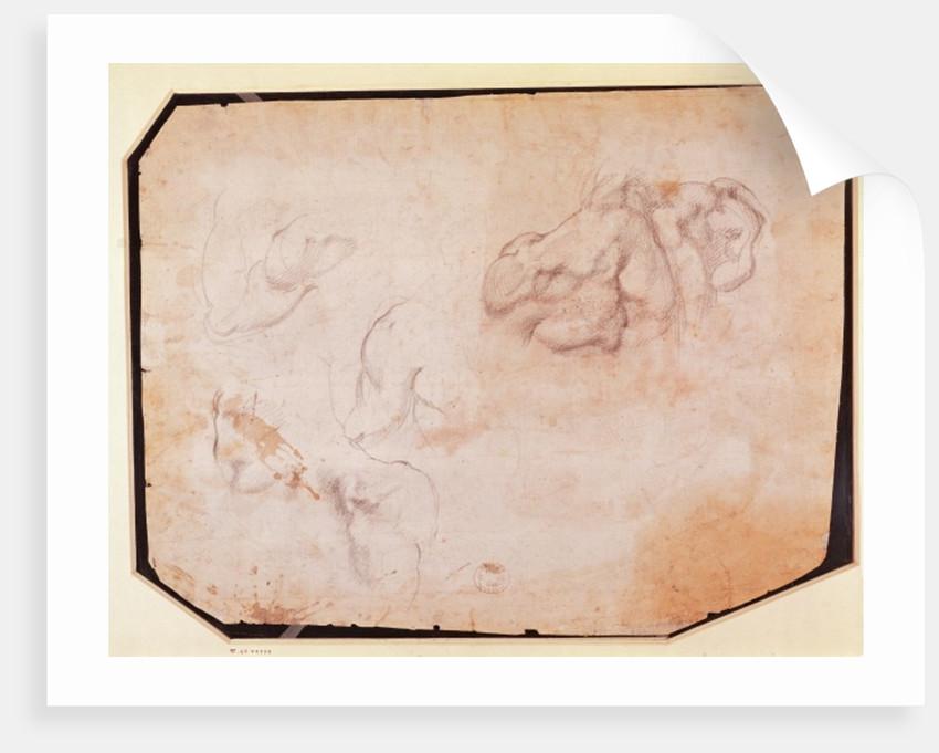Study of Muscles (verso) by Michelangelo Buonarroti
