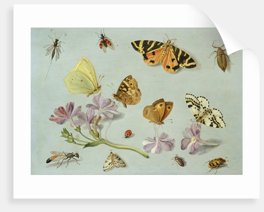 Butterflies, moths and other insects with a sprig of periwinkle by Jan van