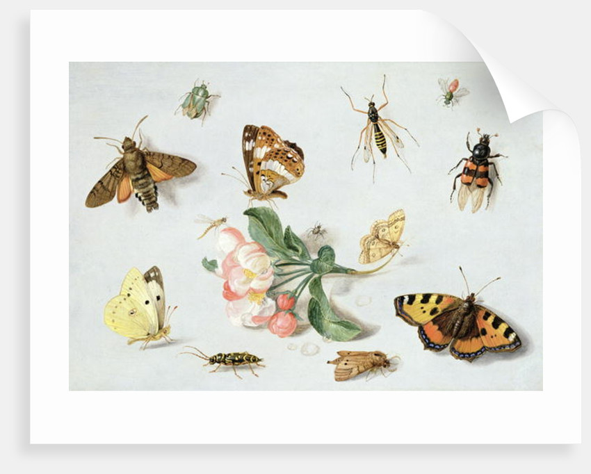 Butterflies, moths and other insects with a sprig of apple blossom by Jan van