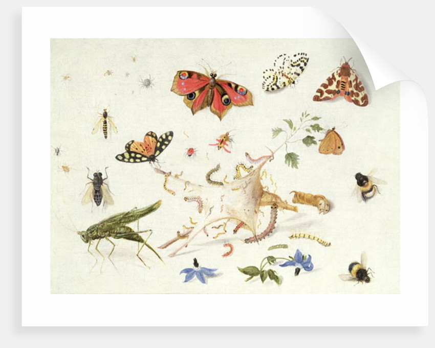 Study of Insects and Flowers by Ferdinand van Kessel