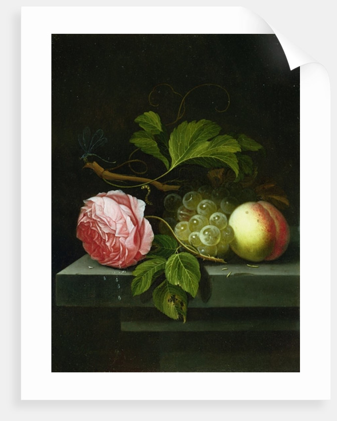 A Still Life with a Rose, Grapes and Peach, 17th century by Johannes Borman