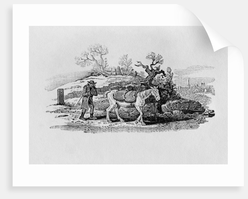 Geese carried to market from 'History of British Birds and Quadrupeds' by Thomas Bewick