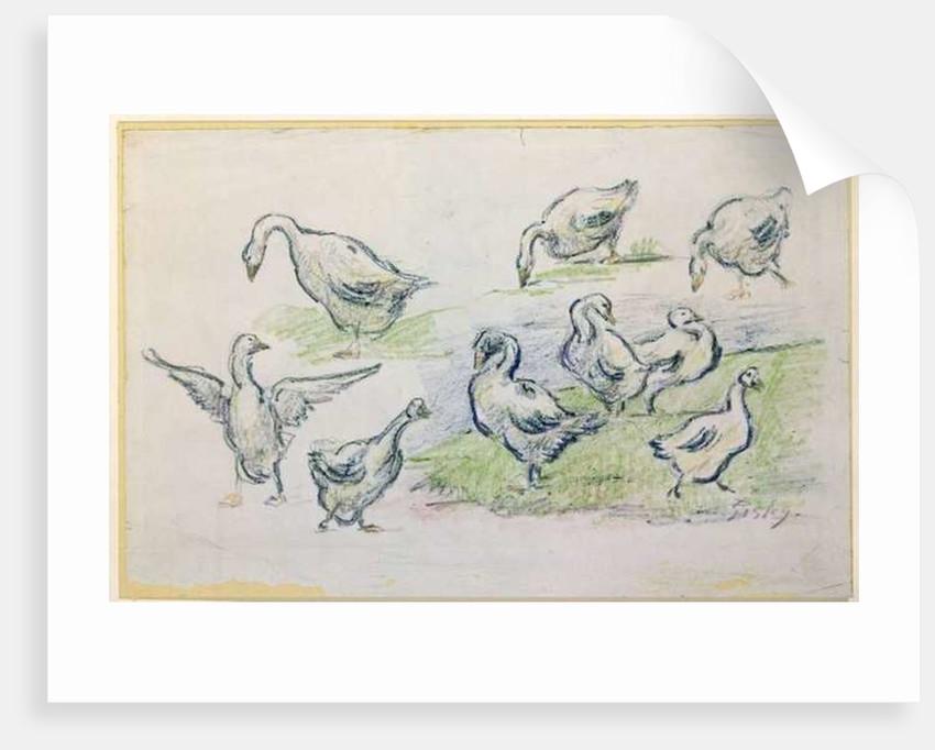Ducks by Alfred Sisley