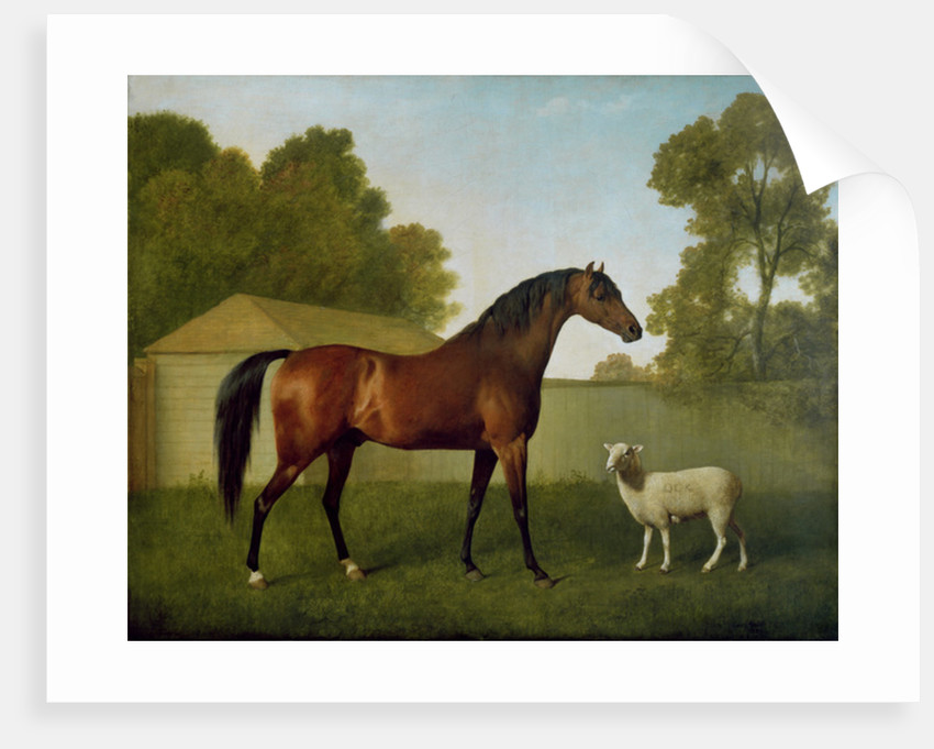 Dungannon, the property of Colonel O'Kelly, painted in a paddock with a sheep by George Stubbs