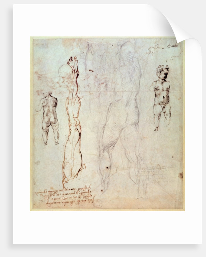 Anatomical drawings with accompanying notes posters & prints by ...