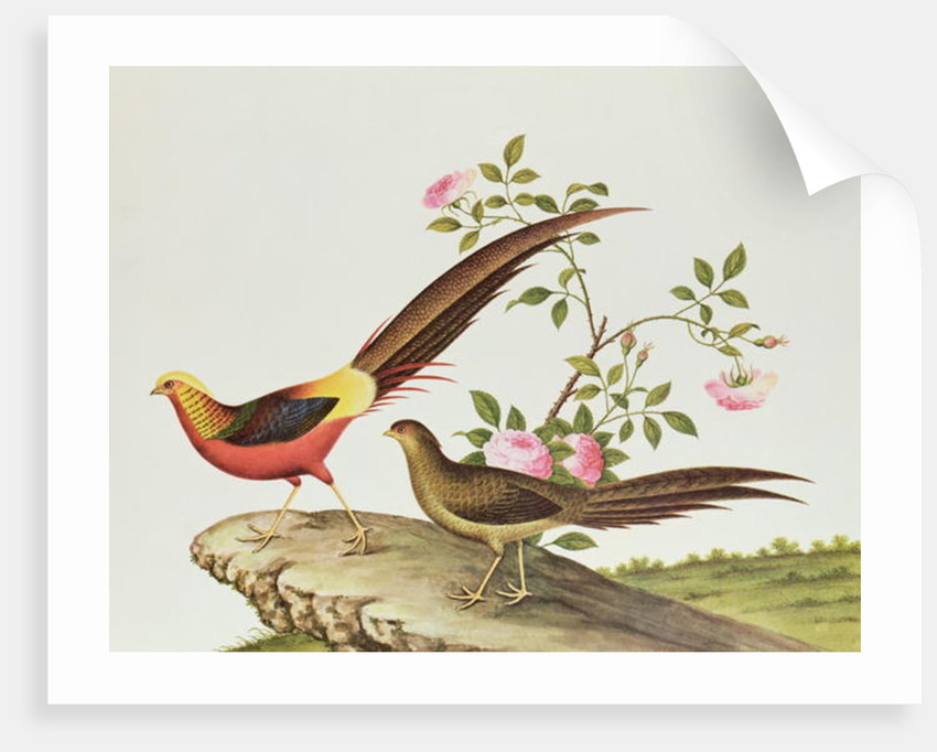 A golden pheasant, Ch'ien-lung period by Qing Dynasty Chinese School
