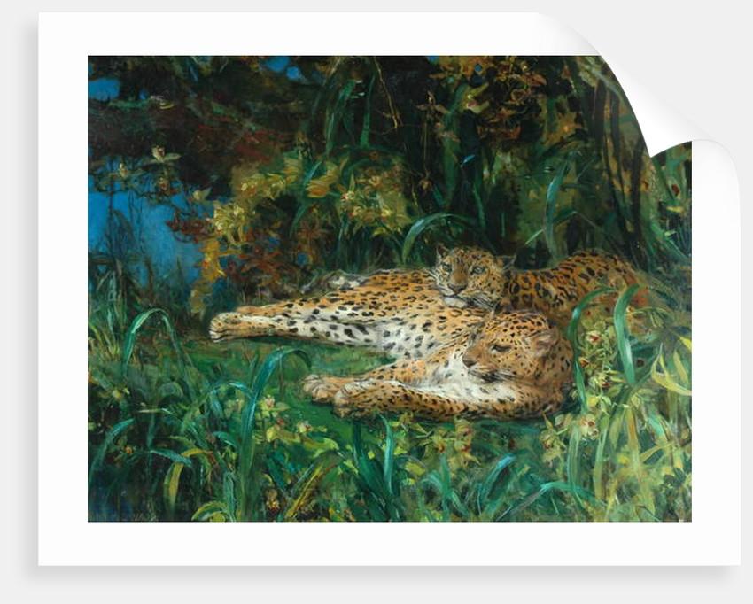 Indian Leopards by John Macallan Swan
