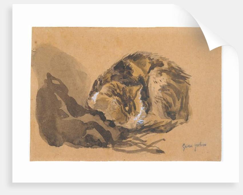 Study of a Cat, 1905-08 by Gwen John