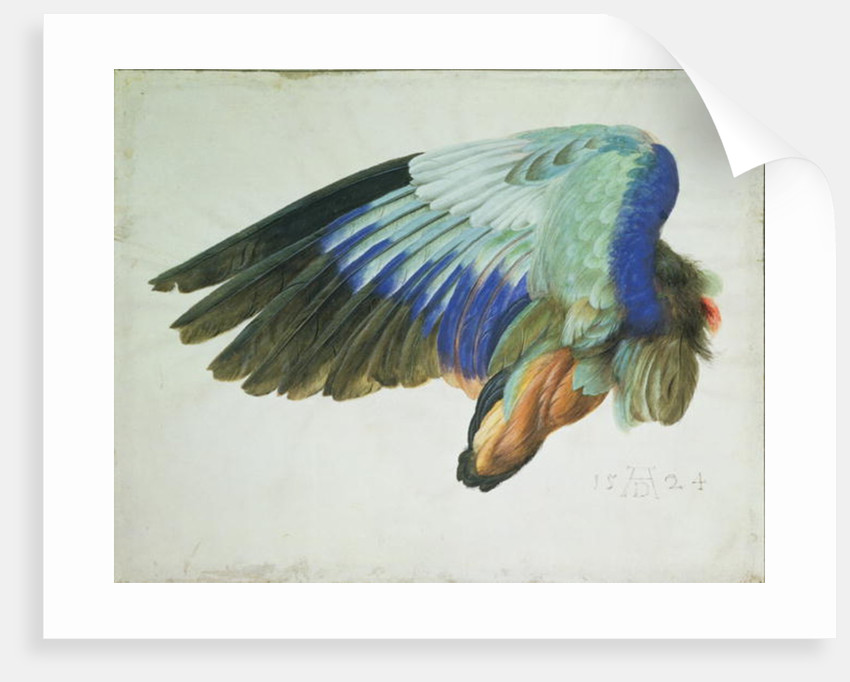 The Right Wing of a Blue Roller copy of an original by Albrecht Durer of 1512, 1524 by Hans Hoffmann