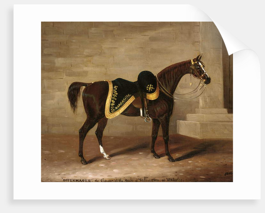 Copenhagen, the charger of the Duke of Wellington at Waterloo by Samuel Spode