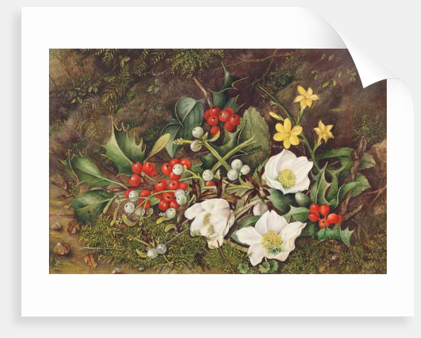 Holly and Christmas Roses by Jane Taylor