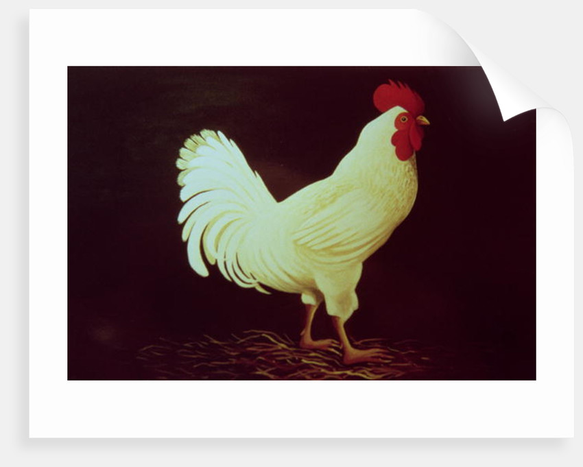 Rooster by Dory Coffee