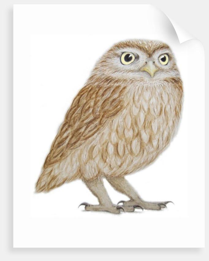 Little Owl by Ele Grafton