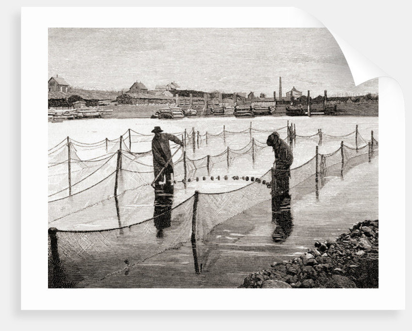 Mr. Atkin's method of penning salmon in the Penobscot River, Maine by American School