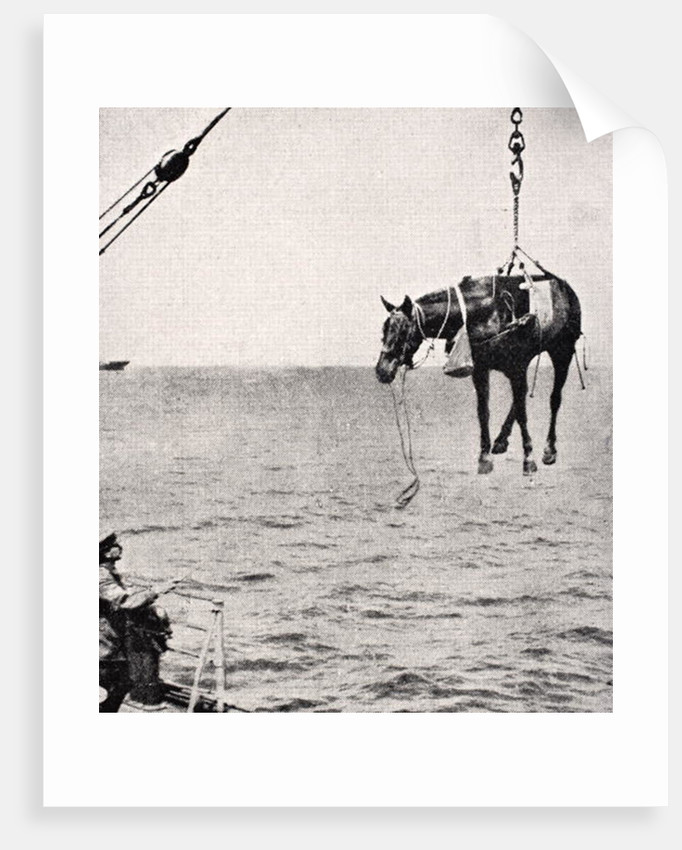Transferring horse from ship to land in Persian Gulf, 1915 by English School