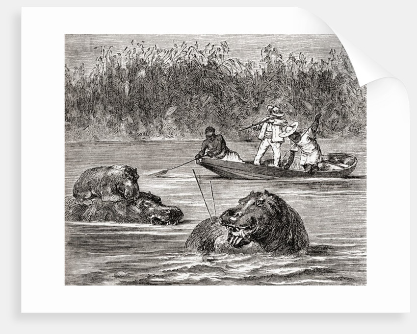 Hippopotamus hunting in Africa in the 19th century. From Africa by Keith Johnston by Anonymous