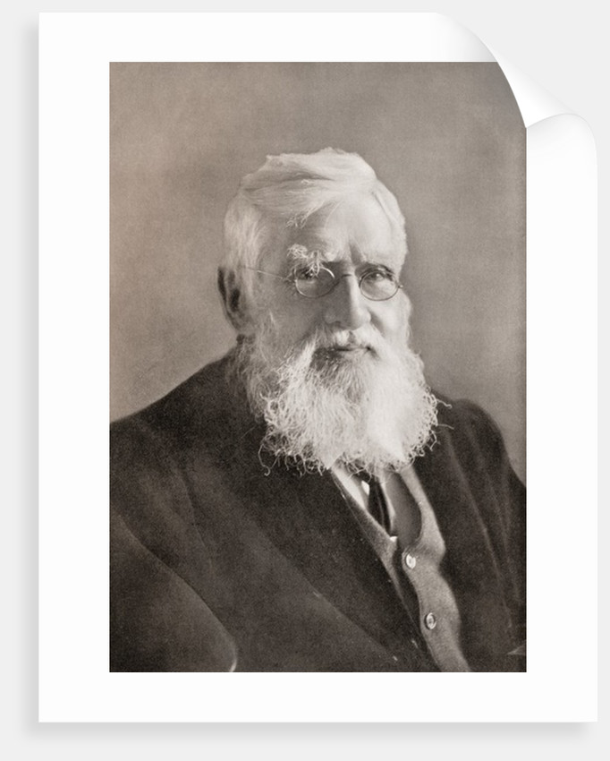 Alfred Russel Wallace. British naturalist, explorer, geographer, anthropologist and biologist by Anonymous