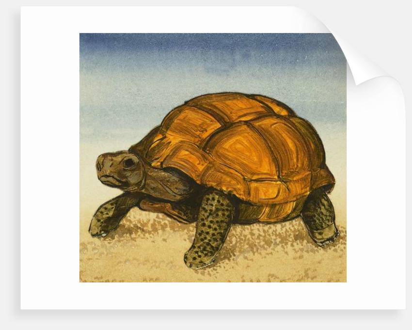 Tortoise by English School