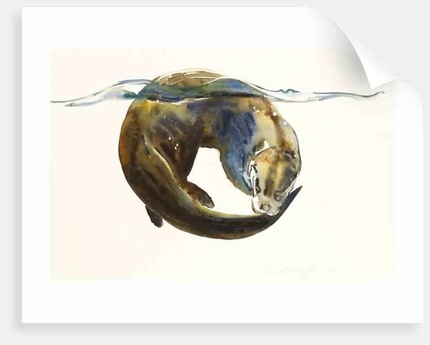 Circle of life by Mark Adlington