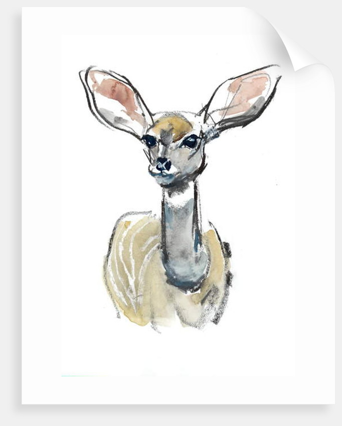 Kudu Fawn, Sarara, 2018 by Mark Adlington