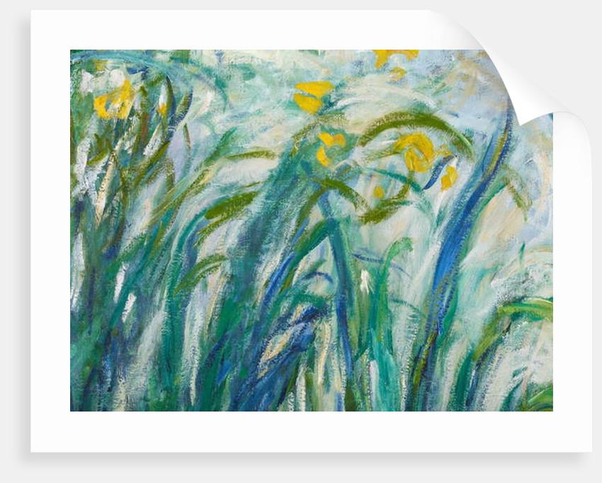 Yellow and Purple Irises, 1924-25 by Claude Monet
