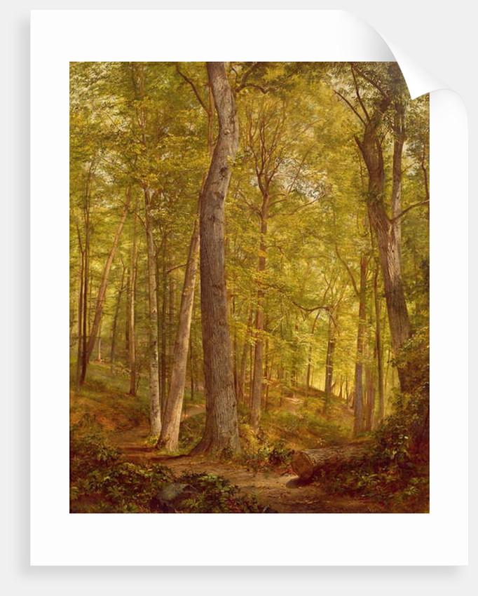 June Woods, Pennsylvania, 1864 by William Trost Richards