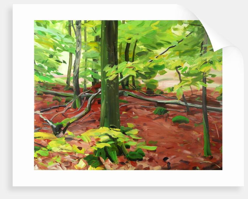Forêt 5 ,2015 by Olivier Morel