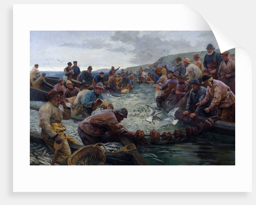 Tucking a School of Pilchards, 1897 by Percy Robert Craft