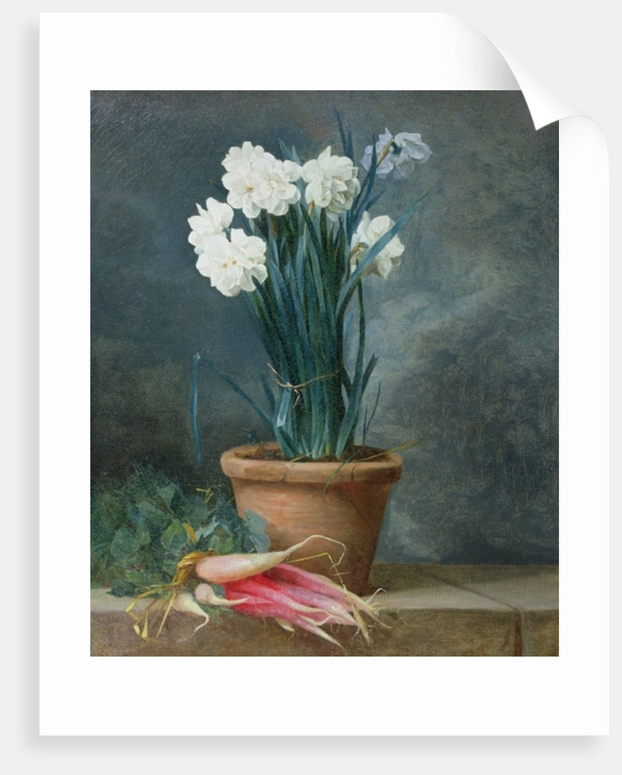 Still Life of Narcissi in a Terracotta Pot by Guillaume-Thomas-Raphael Taraval